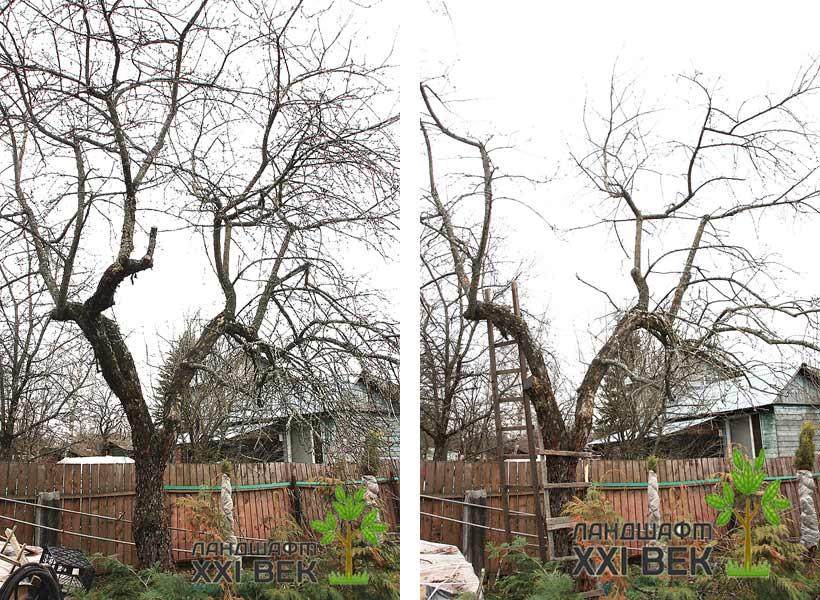 Обрезка деревьев на омоложение