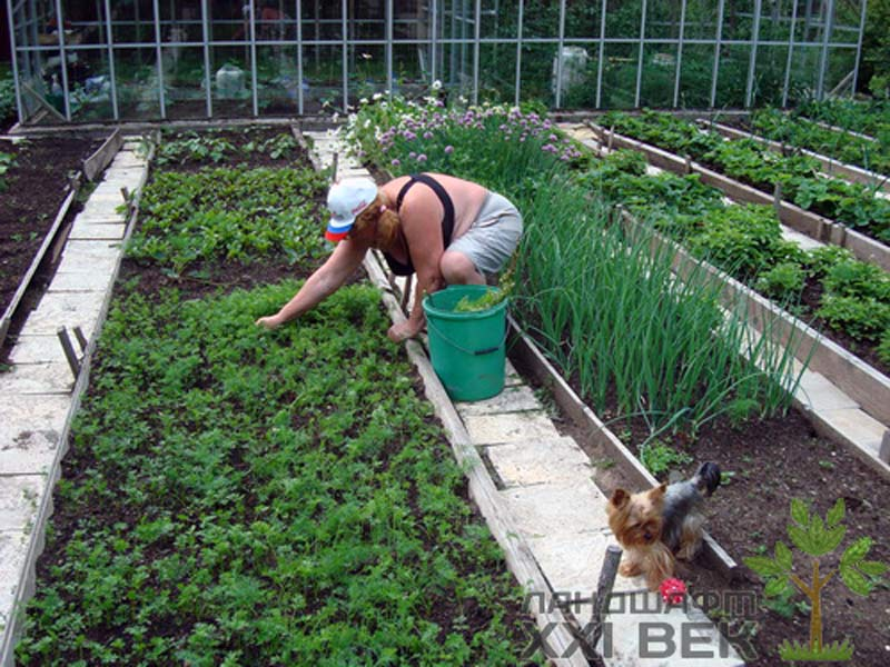 Огороды на дачах фото